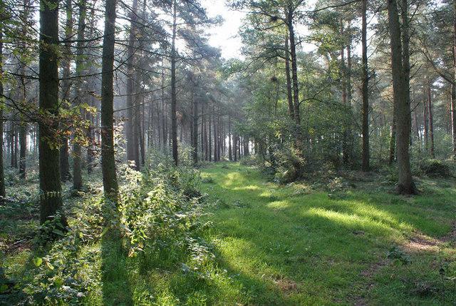 Sunlit plantation