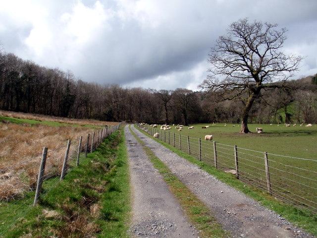 Llwybr Gwynfe House Path