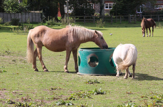 Hillside Animal & Shire Horse Sanctuary, West Runton