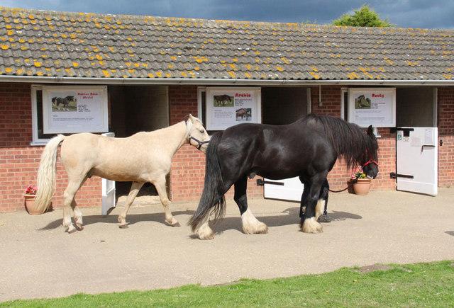 Hillside Animal & Shire Horse Sanctuary, West Runton - Animal rescue