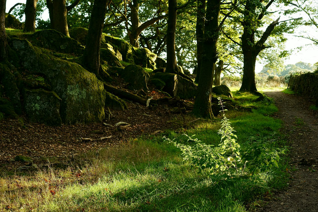 Bankend Wood