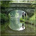 SJ8459 : Deakins Bridge north-east of Scholar Green, Cheshire by Roger  Kidd