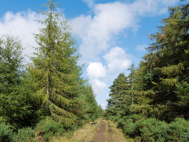 Forestry track near Brae of Badrain