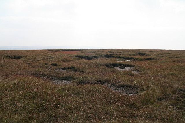 Bogs on Westend Moss