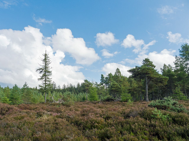Open area of forest near Brae of Badrain
