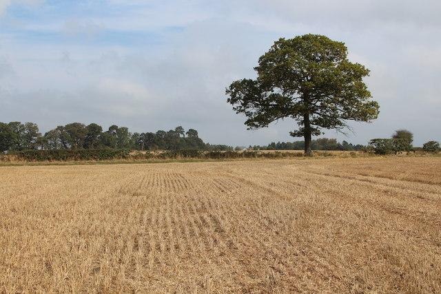 Crop field near Woodmanton Manor