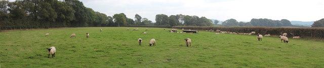 Sheep field near Woodmanton Manor