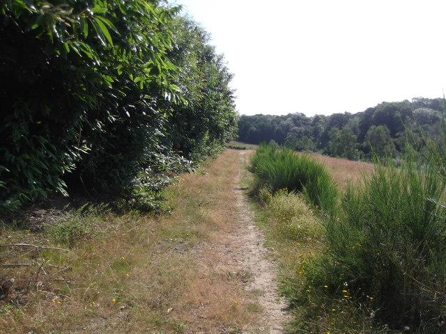 Path below Coldharbour Wood