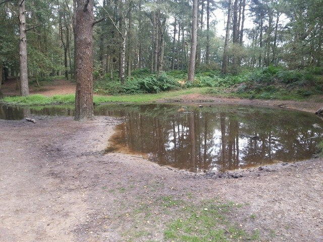 Puddle at Blackdown