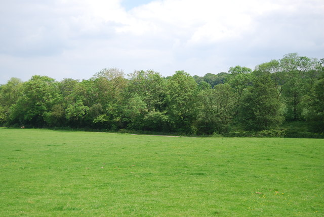 Woodland near Owlett's Farm