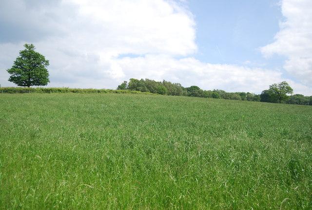 Grassland, Owlett's Farm