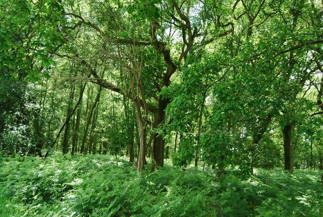 Holden Wood