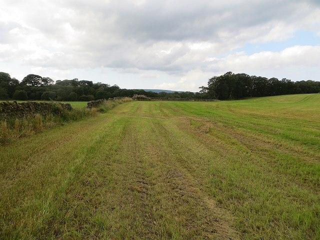 Mown field