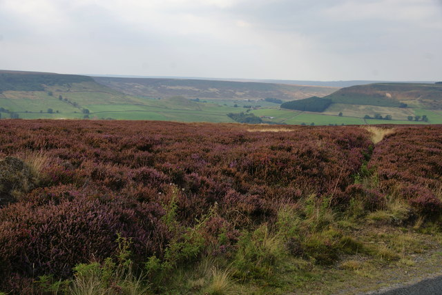 Heather moorland above Great Fryup Dale