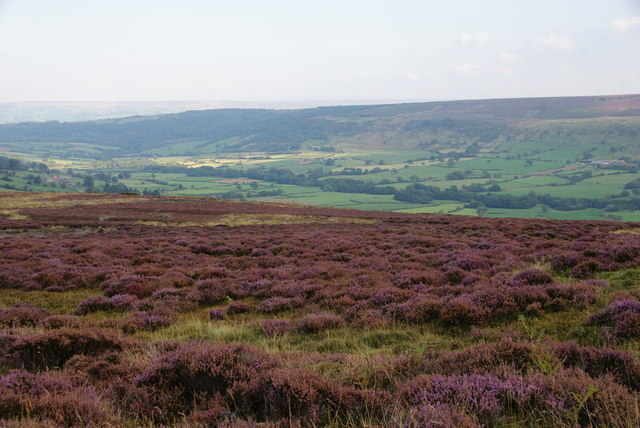 Heather moorland above Glaisdale