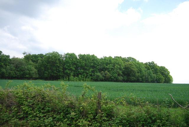 Acre Wood