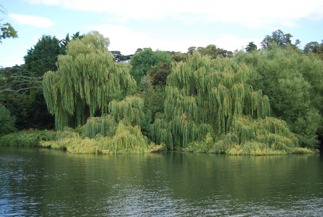 Weeping Willows, Glen Island