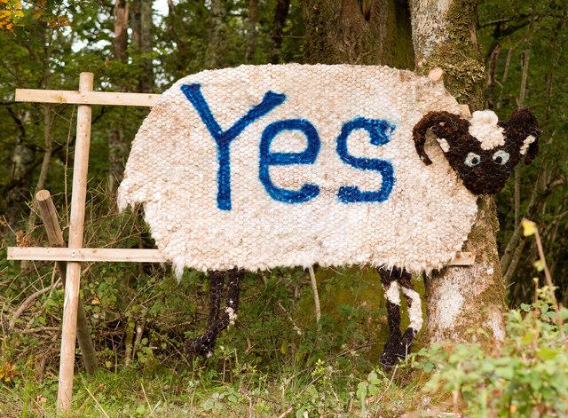 """Seonaidh /Shaun the Sheep says """"YES"""""""