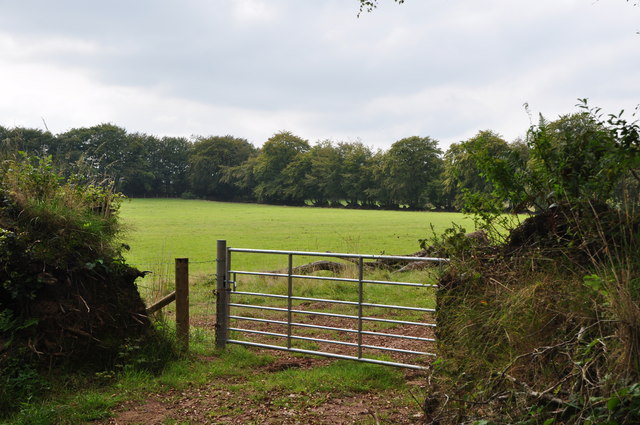 West Somerset : Grassy Field & Gate