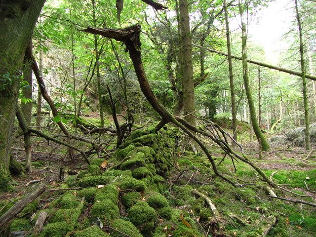 Fallen branch in Aberglaslyn Woods
