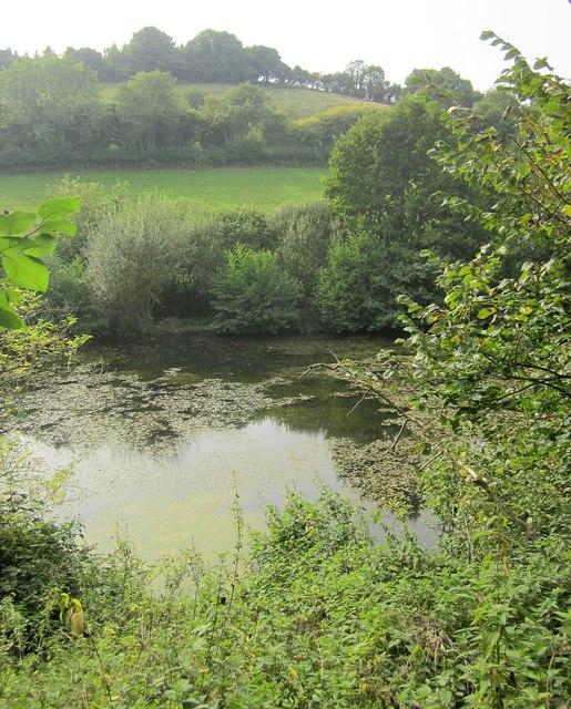 Pond, Rocombe valley