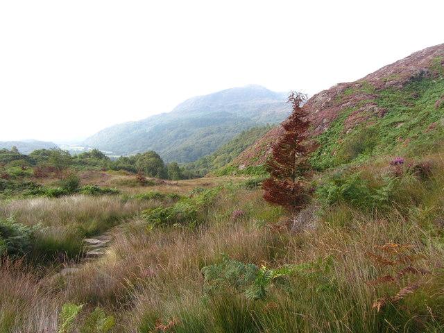 Path through Cwm Bychan