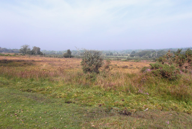 Heathland near Shoot Wood