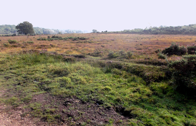 Heathland near Shoot Wood