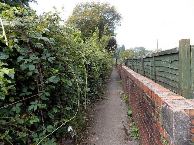 Wooden fence, brick wall and rank brambles alongside a Cwmbran path