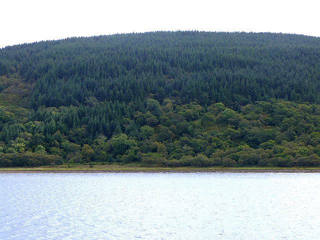Forested shore below Creag na h'Inghean