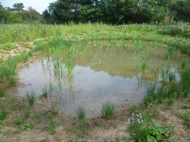 The Old Yachting Pond, Tooting Graveney Common