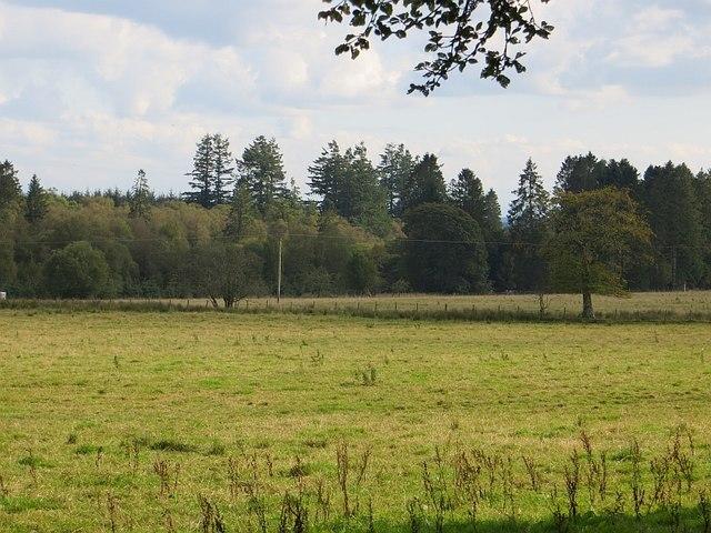 Field and Edgemoor Wood