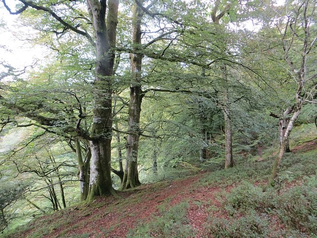 Woodland above the Kinnel Water