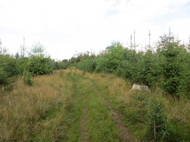 Woodland above Kinnel Linn
