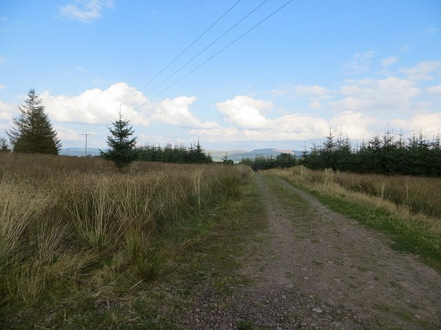 Track, Hazelbank Plantation