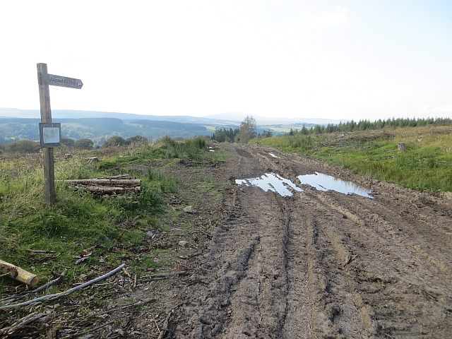 Rutted road, Hazelbank Plantation
