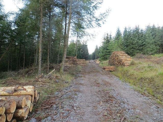 Log piles, Kinnelknock
