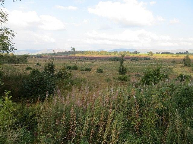 View towards Lochwood Moss
