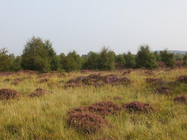 Former field