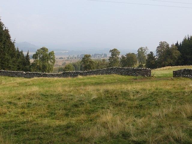 Field near Insh