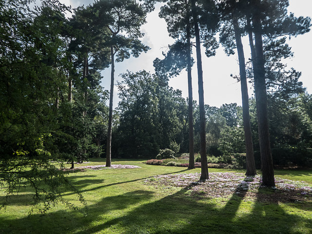 Cyclamen under Pine Trees, Royal Horticultural Society Garden, Wisley