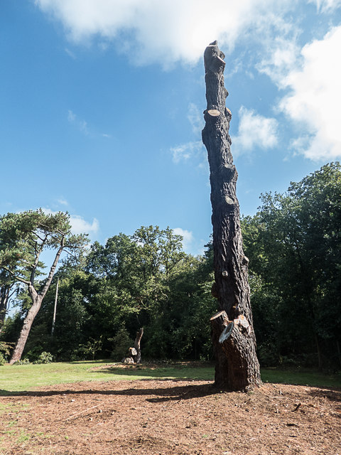 Remains of Pine Tree, Royal Horticultural Society Garden, Wisley