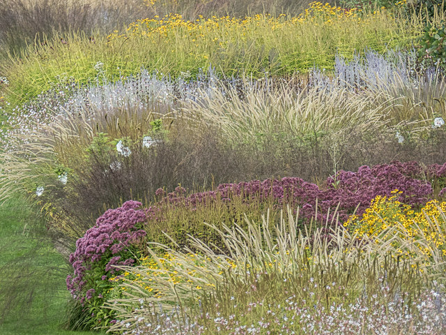 Flowerbed, Royal Horticultural Society Garden, Wisley