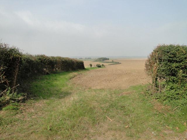 Field at Rue's farm