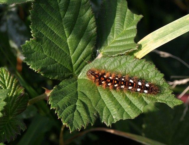 Caterpillar, Nightingale Park