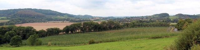 Hop field near Dumbleton Brook