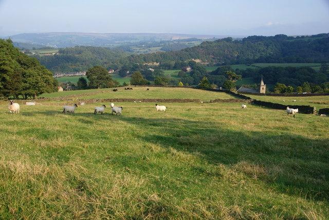 Sheep above Glaisdale village