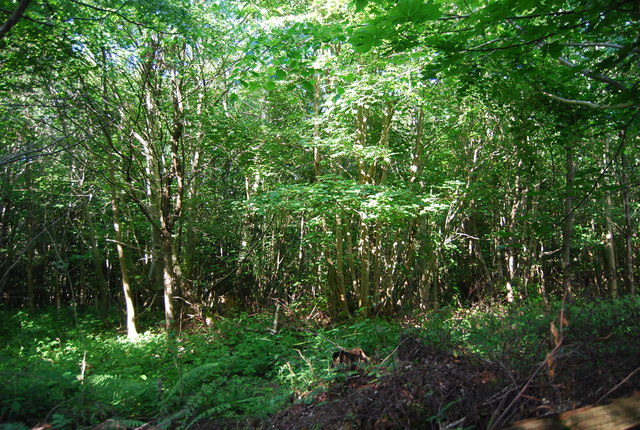 Dense vegetation, Park Wood