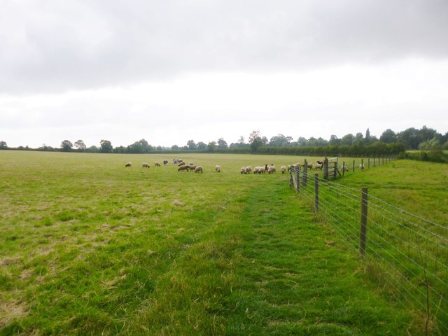 Upper Heyford, sheep grazing