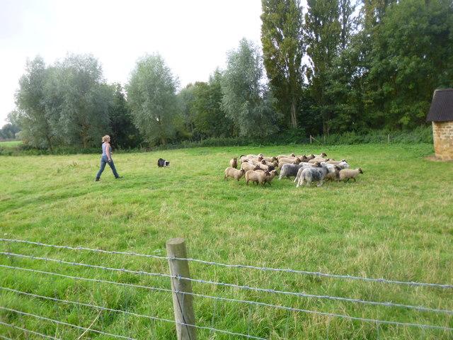Upper Heyford, shepherding